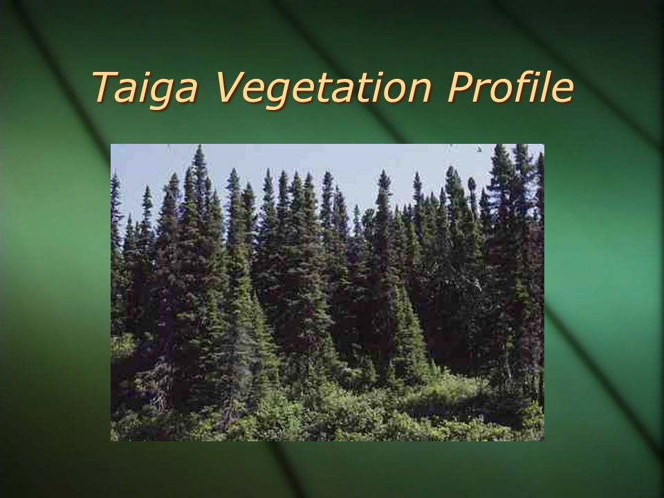 Taiga Vegetation Profile