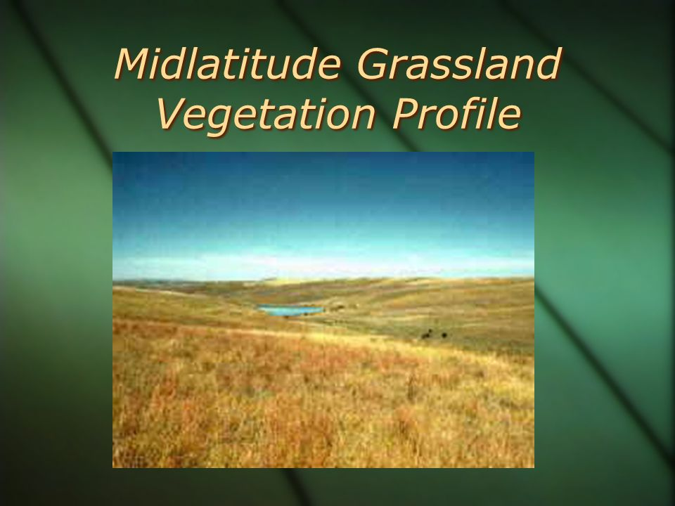 Midlatitude Grassland Vegetation Profile