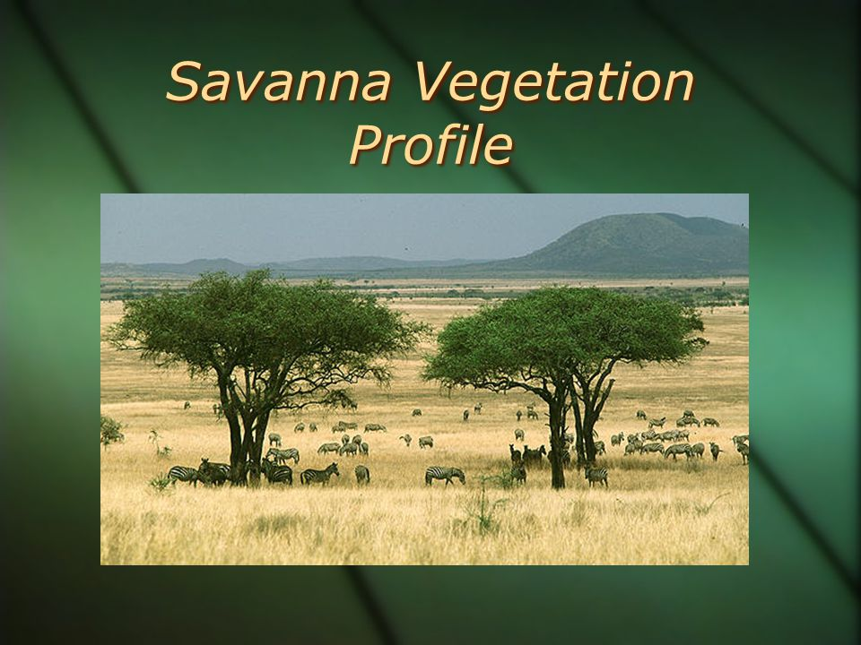 Savanna Vegetation Profile