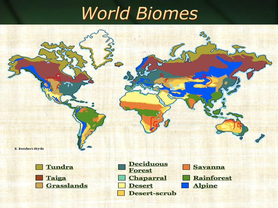 World Biomes Polar Ice Tundra Temperate Rainforest Taiga Temperate Forest Tropical Seasonal Forest Tropical Rain Forest Mediterranean Shrubland Grassland Savanna Desert