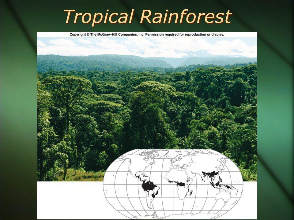 Temperate Rainforest Vegetation Profile