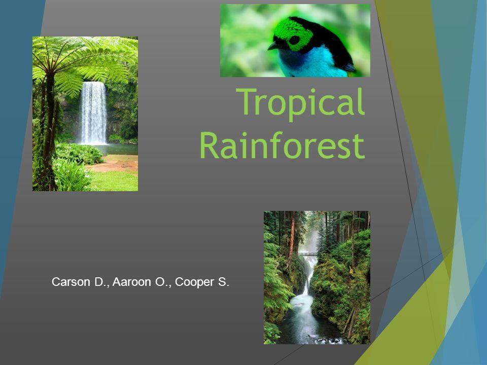 Tropical Rainforest Carson D., Aaroon O., Cooper S.