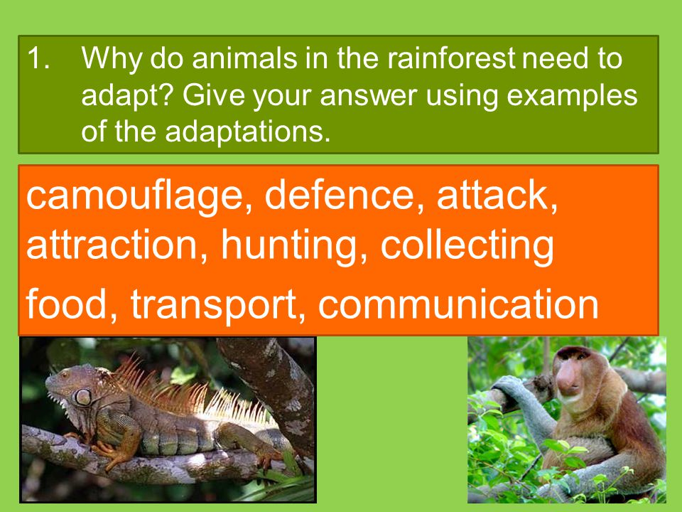 1.Why do animals in the rainforest need to adapt? Give your answer using examples of the adaptations. camouflage, defence, attack, attraction, hunting
