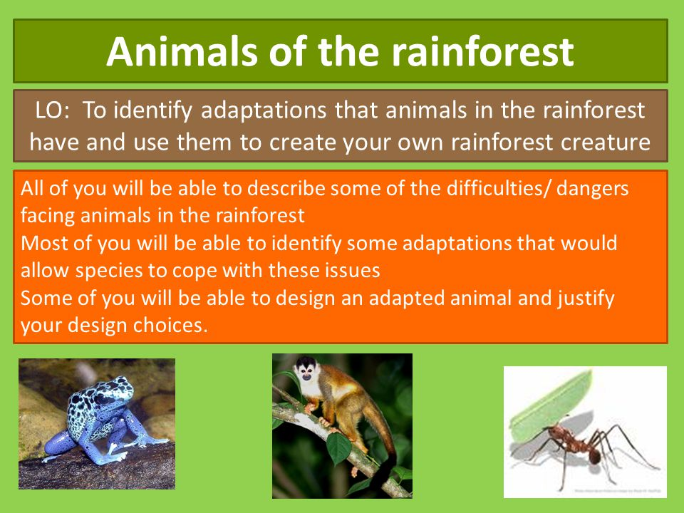 Animals of the rainforest LO: To identify adaptations that animals in the rainforest have and use them to create your own rainforest creature All of y