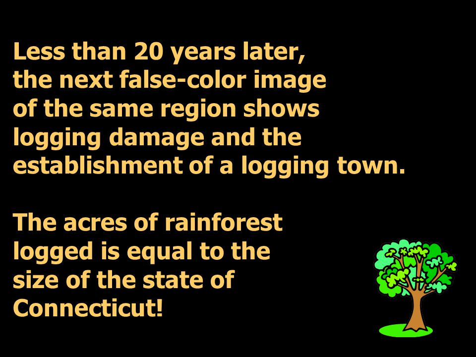 Less than 20 years later, the next false-color image of the same region shows logging damage and the establishment of a logging town.
