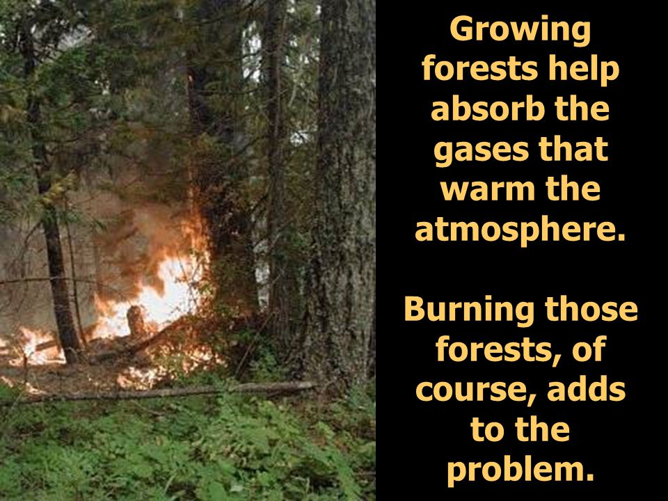 Growing forests help absorb the gases that warm the atmosphere.