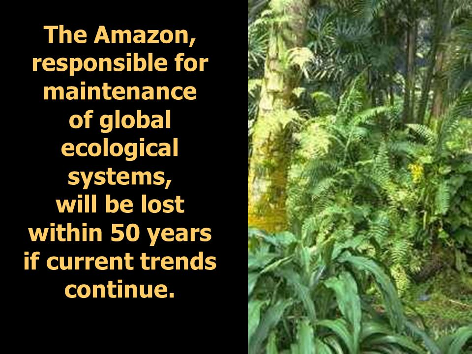 The Amazon, responsible for maintenance of global ecological systems, will be lost within 50 years if current trends continue.
