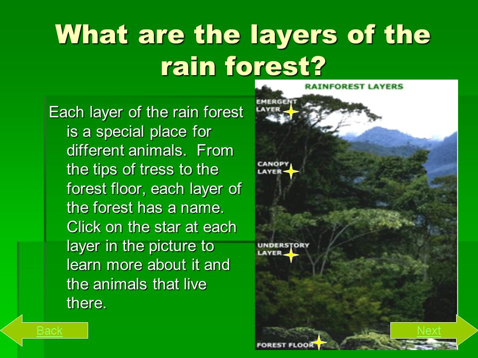 What is the Amazon Rainforest. Rain forests are very dense, warm, wet forests.