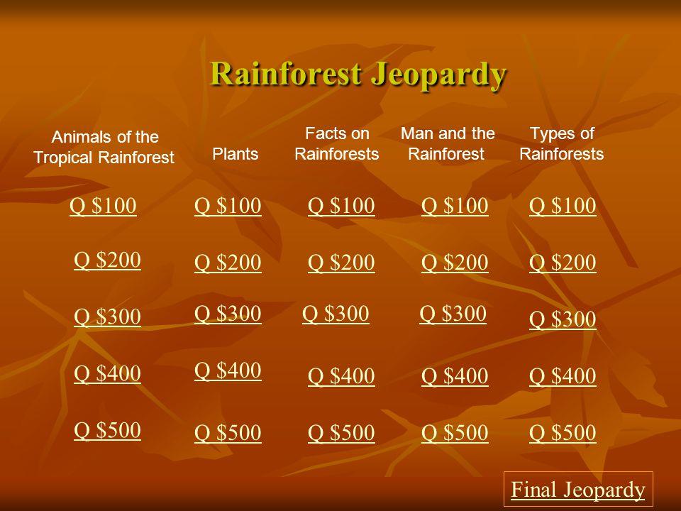 $500 Answer from Tropical Rainforest Animals Jaguar