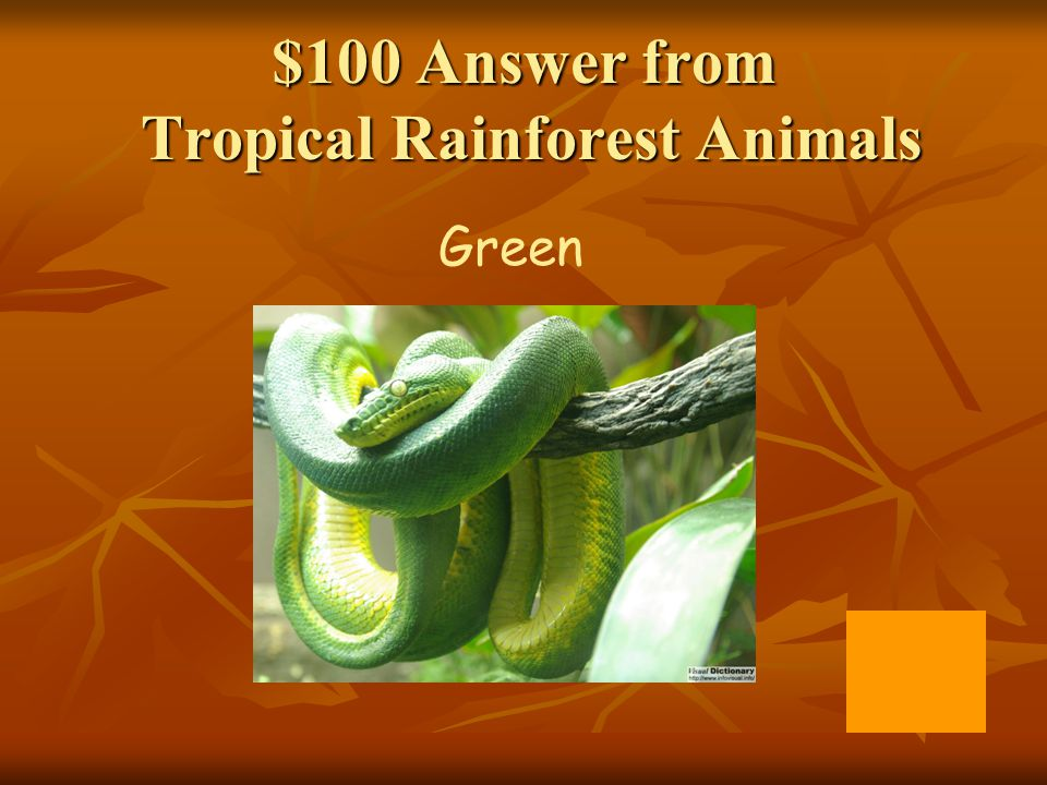 $100 Answer from Tropical Rainforest Animals Green