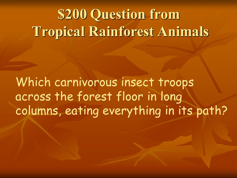 $200 Question from Types of Rainforests Temperate rainforests are found on what continent?