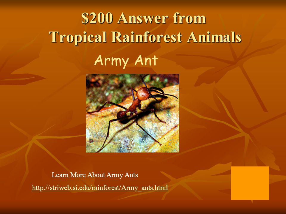 $200 Answer from Man and the Rainforest Slash and Burn Farming (poor soil produces few crops and the trees that provide so much are gone )
