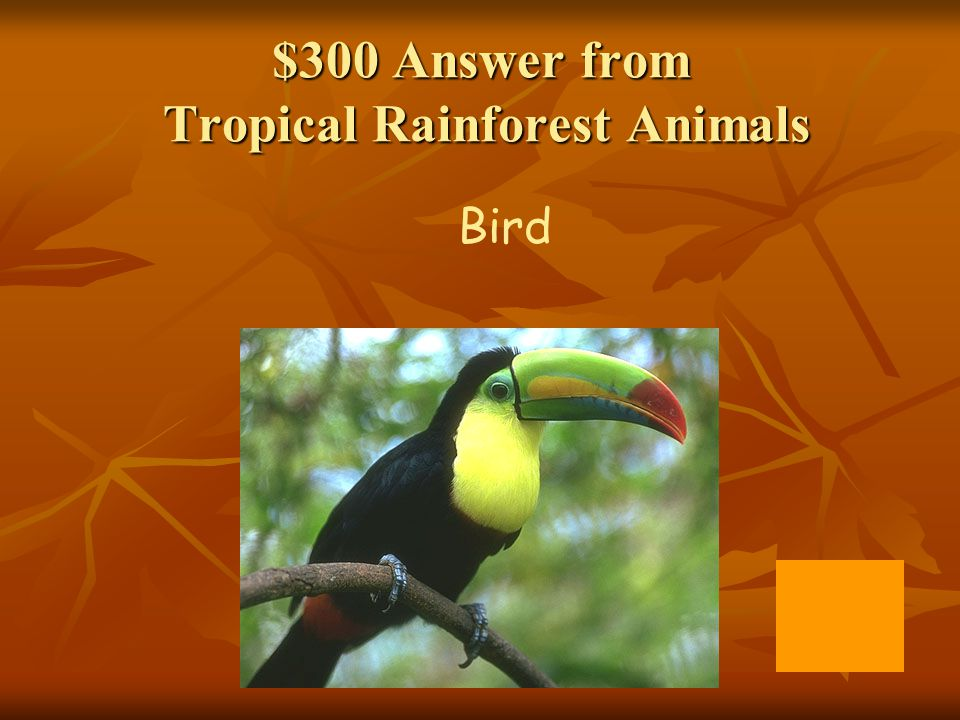 $300 Answer from Facts on Rainforests Emergent Layer, Canopy, Understory, and Forest Floor