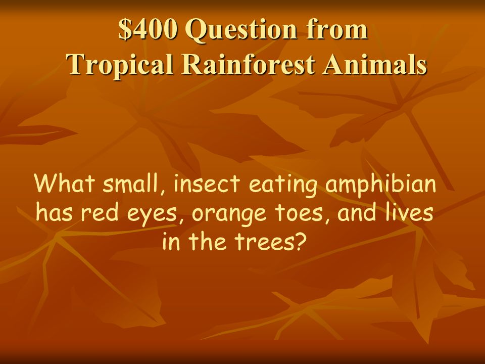 $400 Question from Tropical Rainforest Animals What small, insect eating amphibian has red eyes, orange toes, and lives in the trees?