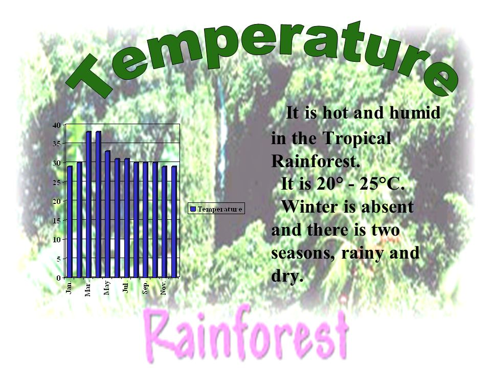 It is hot and humid in the Tropical Rainforest. It is 20° - 25°C. Winter is absent and there is two seasons, rainy and dry.
