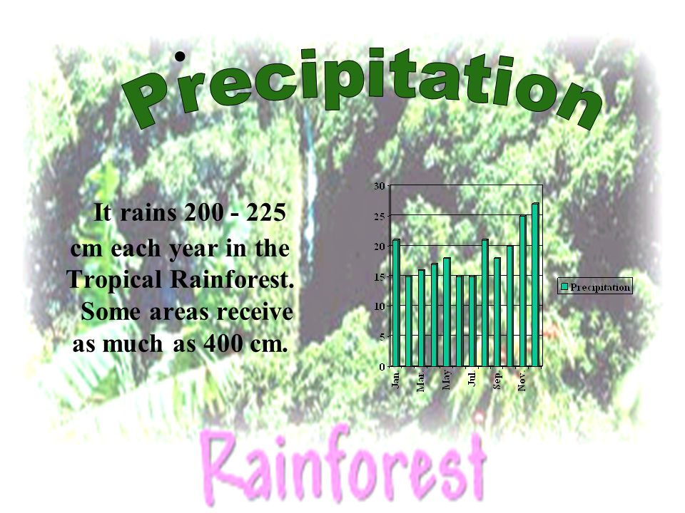 The Plants In the Tropical Rainforest there is 700 species of trees and 1000 species of plants.