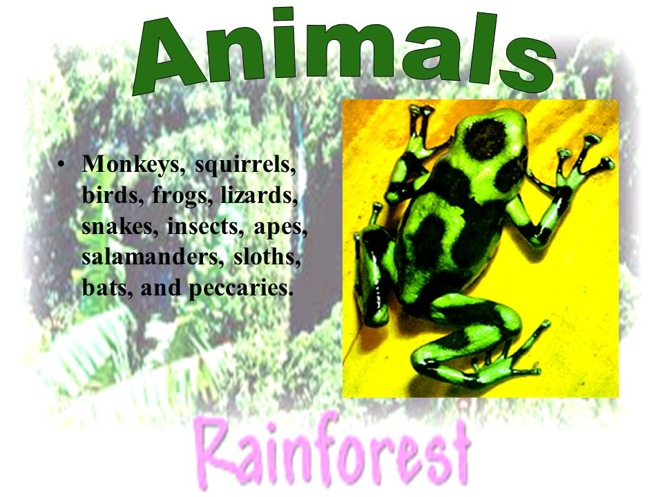Monkeys, squirrels, birds, frogs, lizards, snakes, insects, apes, salamanders, sloths, bats, and peccaries.