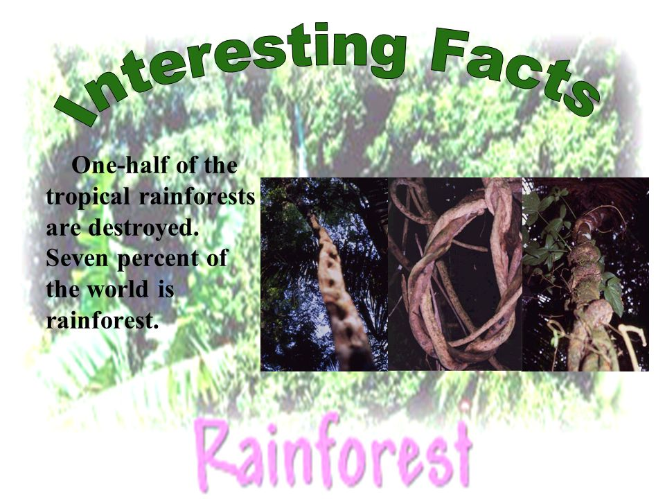 What continent is there more rainforest.How many seasons are there.