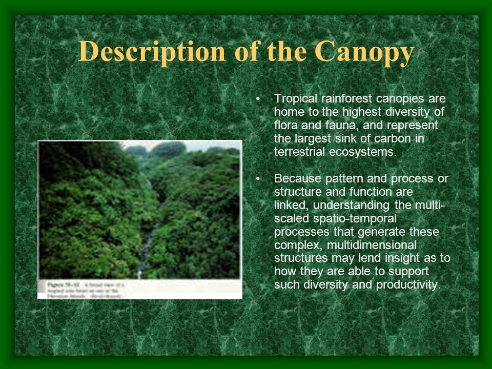 5 Description ... & Tropical Rainforest By: Michaela A. Rankins Description These are ...