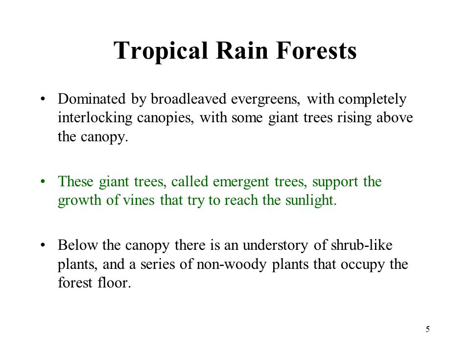 5 Tropical Rain Forests Dominated by broadleaved evergreens, with completely interlocking canopies, with some giant trees rising above the canopy. The