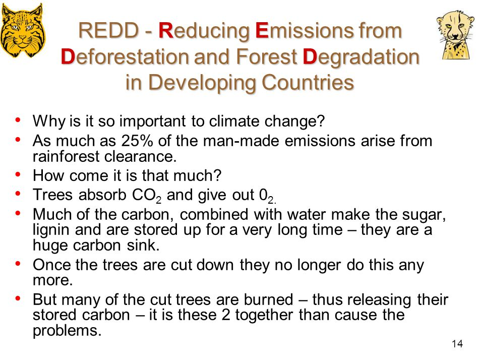 15 REDD - Reducing Emissions from Deforestation and Forest Degradation in Developing Countries The Basics: reforestation and afforestation were part of off-setting from the start – but reducing deforestation had been deliberately excluded – remember the 'too hard' box.