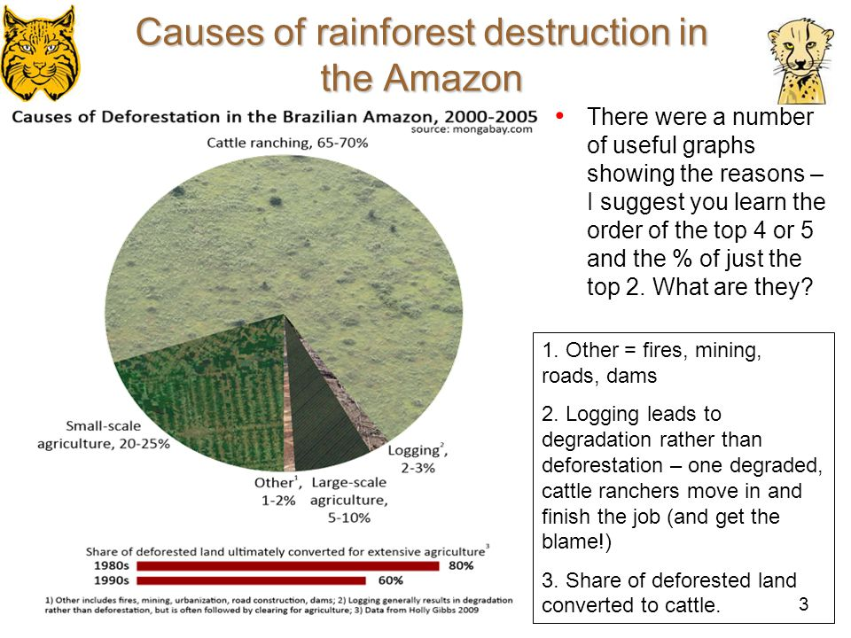 4 Causes of rainforest destruction in the Amazon What pattern can you see here?