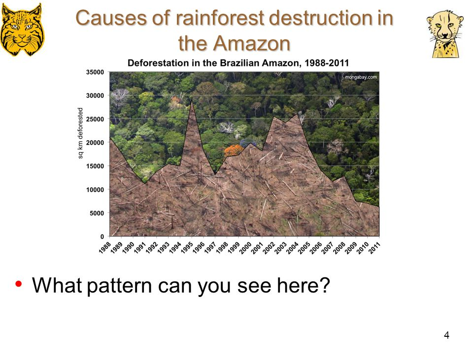 5 A few more thoughts Deforestation is happening in the Amazon for many different reasons, and couple of these are human settlement on the land (using the land for sheep and cow ranching), trees being harvested for many reasons (creating furniture, paper, to build structures), drugs, for medical plants, fire wood, setting up industries, land for agriculture.