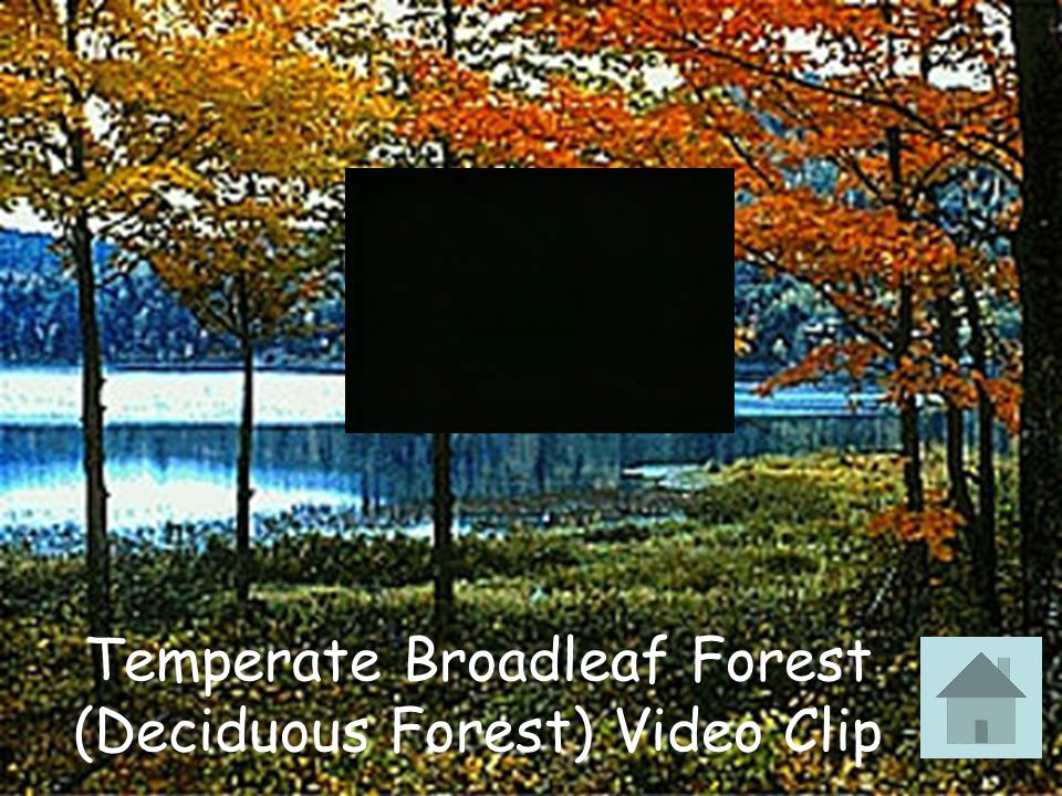 Temperate Broadleaf Forest (Deciduous Forest) Video Clip