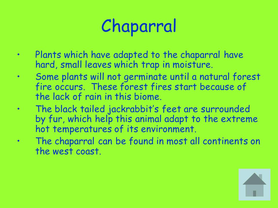 Chaparral Plants which have adapted to the chaparral have hard, small leaves which trap in moisture. Some plants will not germinate until a natural fo