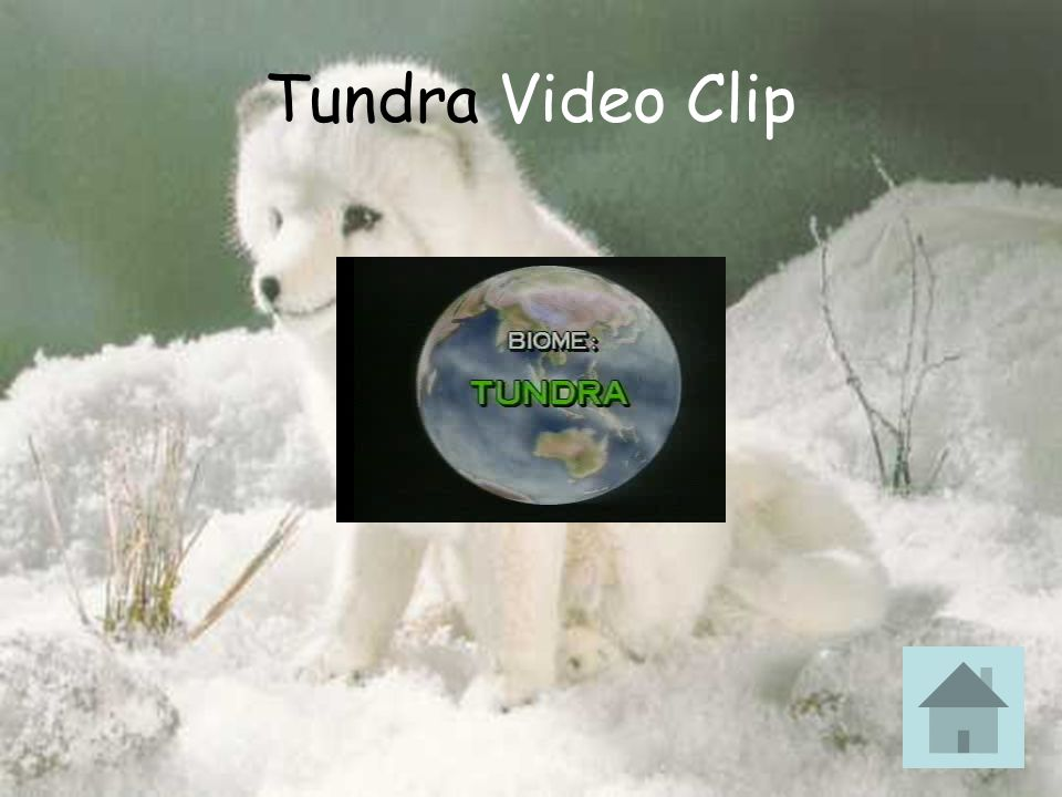 Tundra Video Clip