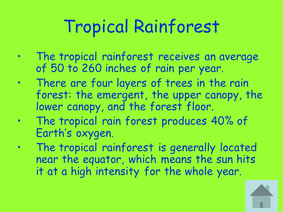 Tropical Rainforest The tropical rainforest receives an average of 50 to 260 inches of rain per year. There are four layers of trees in the rain fores