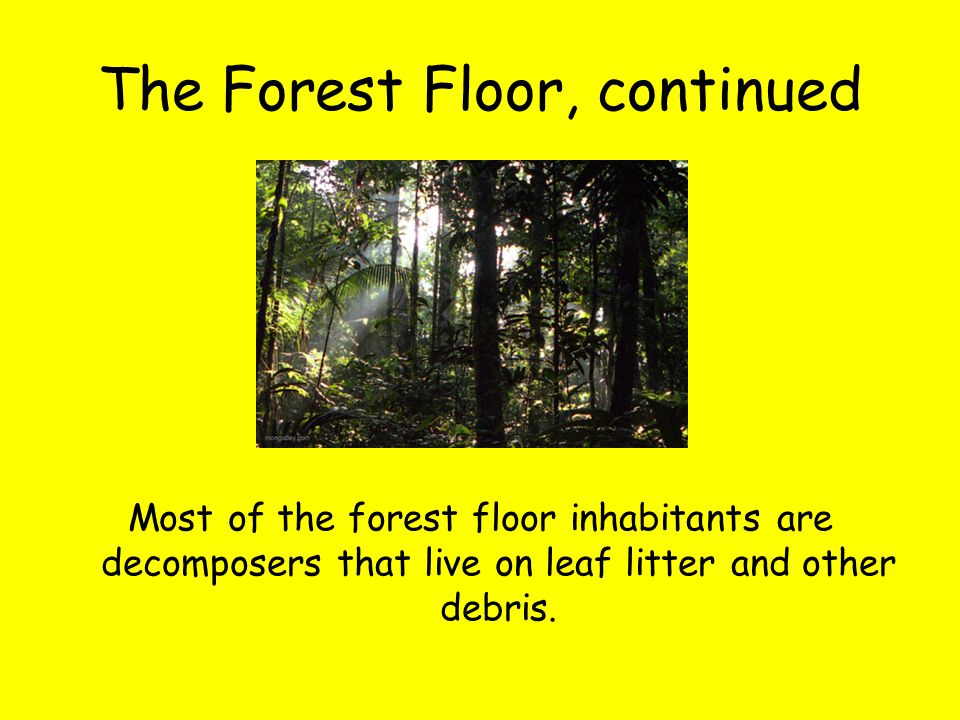 The Forest Floor, continued Most of the forest floor inhabitants are decomposers that live on leaf litter and other debris.