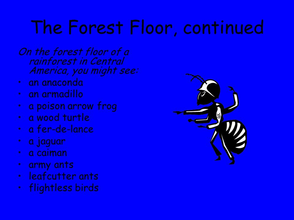 The Forest Floor, continued On the forest floor of a rainforest in Central America, you might see: an anaconda an armadillo a poison arrow frog a wood