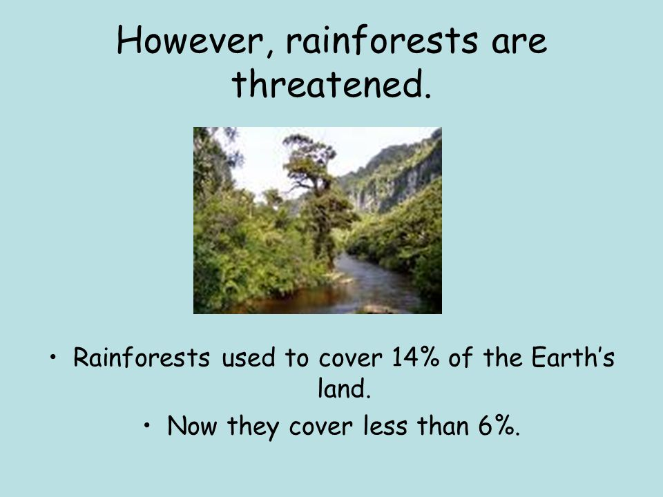 However, rainforests are threatened. Rainforests used to cover 14% of the Earth's land. Now they cover less than 6%.