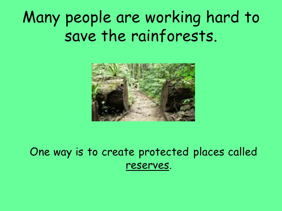 Many people are working hard to save the rainforests. One way is to create protected places called reserves.