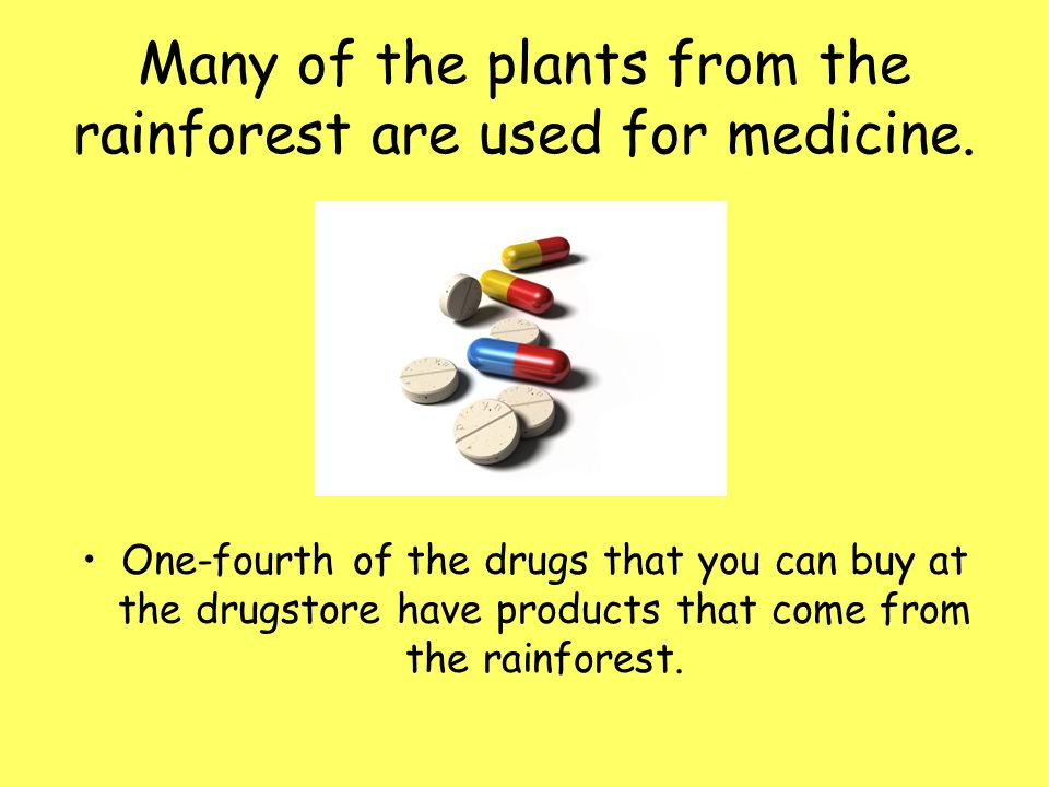 Many of the plants from the rainforest are used for medicine. One-fourth of the drugs that you can buy at the drugstore have products that come from t