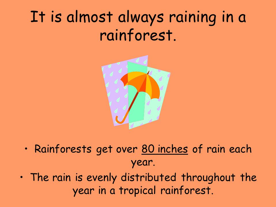 It is almost always raining in a rainforest. Rainforests get over 80 inches of rain each year. The rain is evenly distributed throughout the year in a