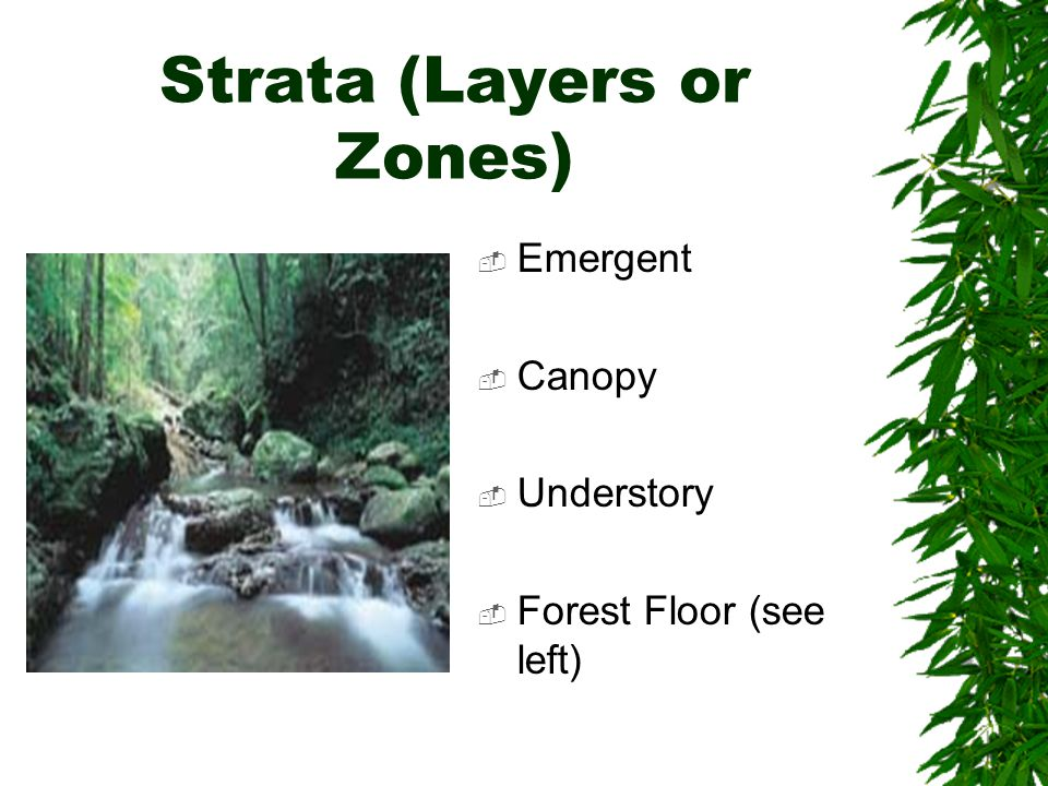 Strata (Layers or Zones)  Emergent  Canopy  Understory  Forest Floor (see left)