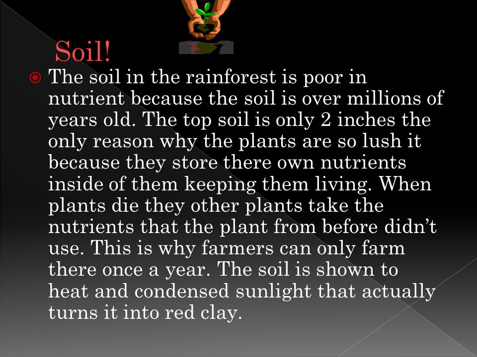  The soil in the rainforest is poor in nutrient because the soil is over millions of years old.