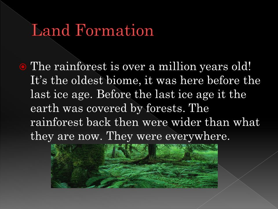  The rainforest is over a million years old.
