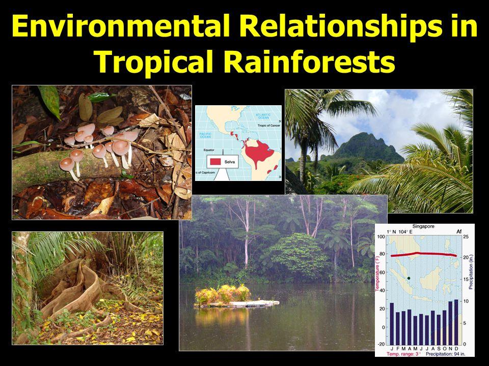 Summary: Tropical Rainforest Where: Straddles Equator by 5 o - 10 o.
