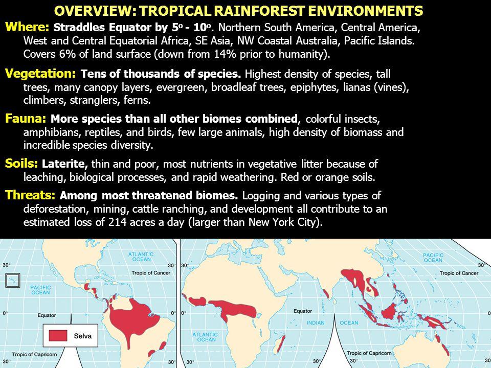 Tropical Rainforest Vegetation: Broadleaf Evergreen Deciduous vs.