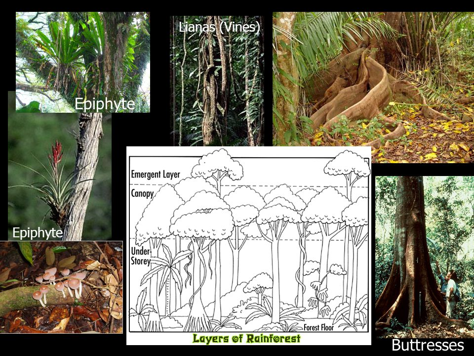 Strangler Fig 3-Toed Sloth, Panama Clear-cut Tropical Deforestation Slash-and-Burn Agriculture Leaf-cutter Ants, Costa Rica