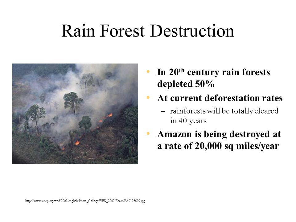 Rain Forest Destruction In 20 th century rain forests depleted 50% At current deforestation rates –rainforests will be totally cleared in 40 years Amazon is being destroyed at a rate of 20,000 sq miles/year http://www.unep.org/wed/2007/english/Photo_Gallery/WED_2007/Zoom/PA0176629.jpg