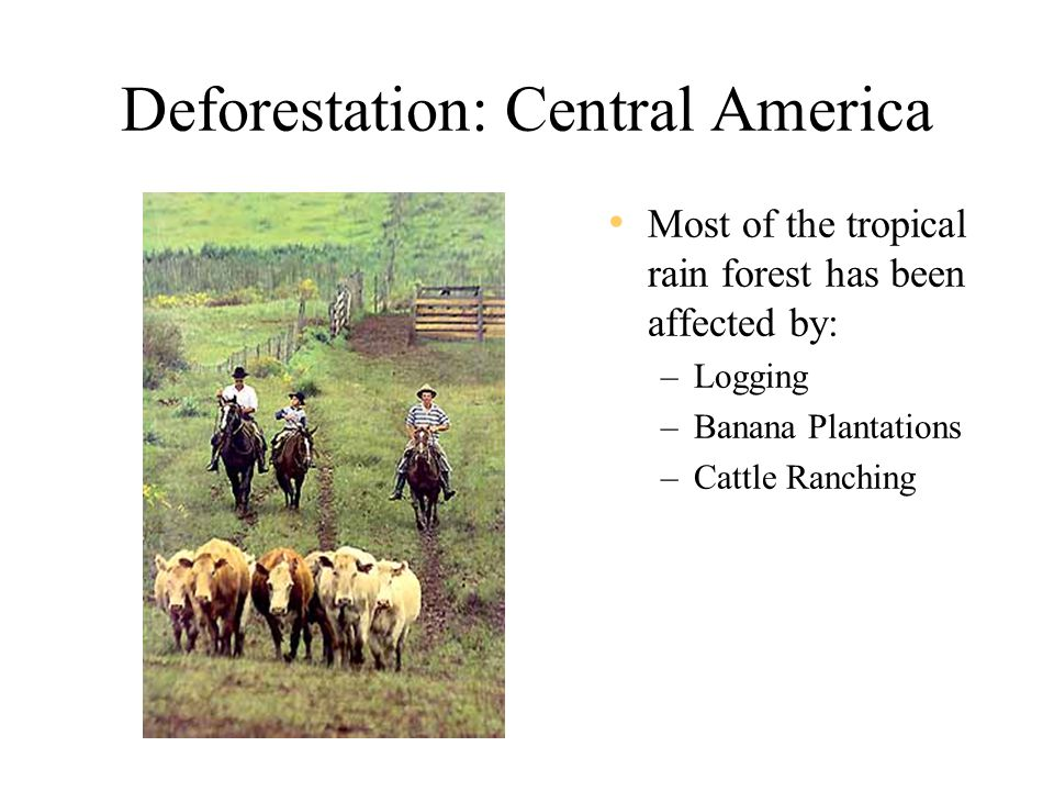 Deforestation: Central America Most of the tropical rain forest has been affected by: –Logging –Banana Plantations –Cattle Ranching