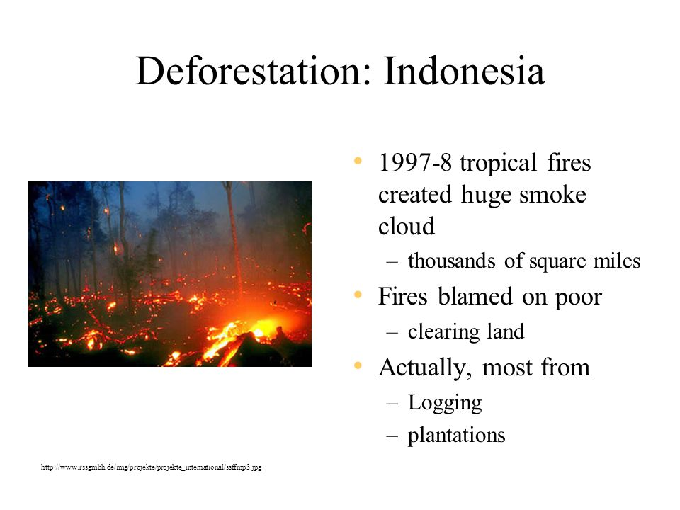 Deforestation: Indonesia 1997-8 tropical fires created huge smoke cloud –thousands of square miles Fires blamed on poor –clearing land Actually, most from –Logging –plantations http://www.rssgmbh.de/img/projekte/projekte_international/ssffmp3.jpg