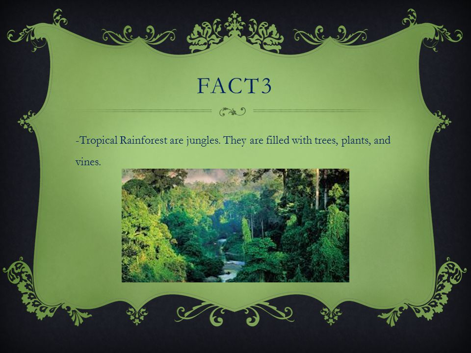 FACT 2 -The world s largest Tropical Rainforest is in the amazon region of south America.