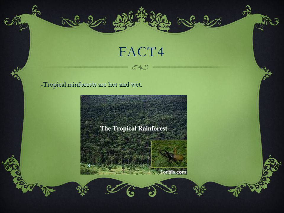 FACT3 -Tropical Rainforest are jungles. They are filled with trees, plants, and vines.