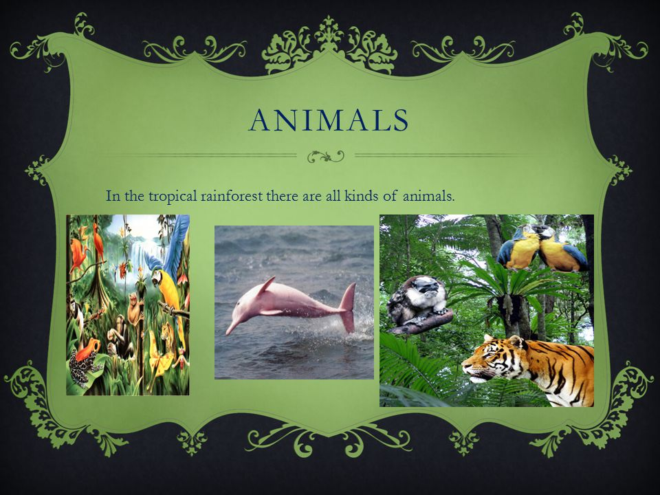 ANIMALS In the tropical rainforest there are all kinds of animals.