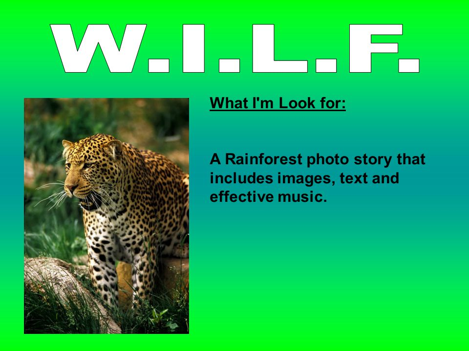 What I m Look for: A Rainforest photo story that includes images, text and effective music.
